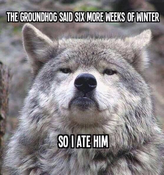 Hey, It's Groundhog Day!